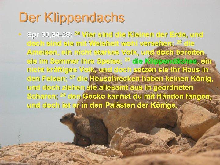 Der Klippendachs • Spr 30, 24 -28: 24 Vier sind die Kleinen der Erde,