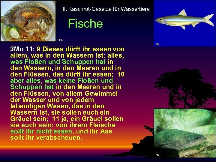 II. Kaschrut-Gesetze für Wassertiere Fische RL 3 Mo 11: 9 Dieses dürft ihr essen