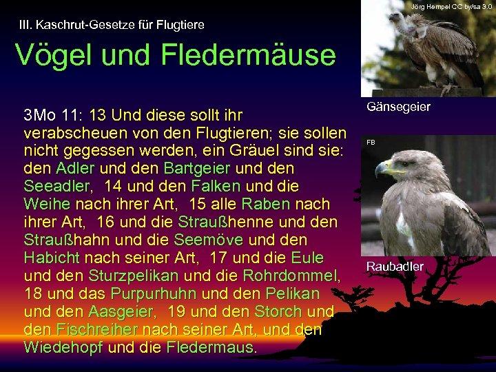 Jörg Hempel CC by/sa 3. 0 III. Kaschrut-Gesetze für Flugtiere Vögel und Fledermäuse 3