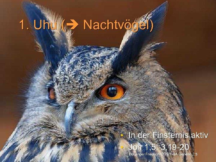 1. Uhu ( Nachtvögel) • • In der Finsternis aktiv Joh 1, 5; 3,