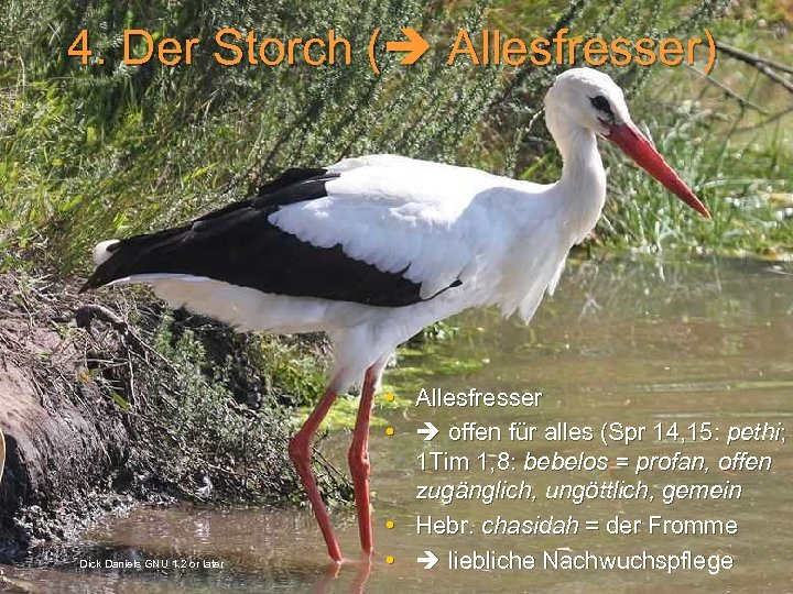 4. Der Storch ( Allesfresser) Dick Daniels GNU 1. 2 or later • Allesfresser