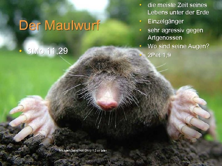 Der Maulwurf • 3 Mo 11, 29 Michael David Hill GNU 1. 2 or