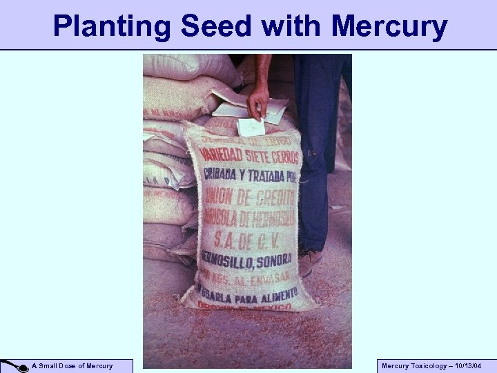 Planting Seed with Mercury A Small Dose of Mercury Toxicology – 10/13/04