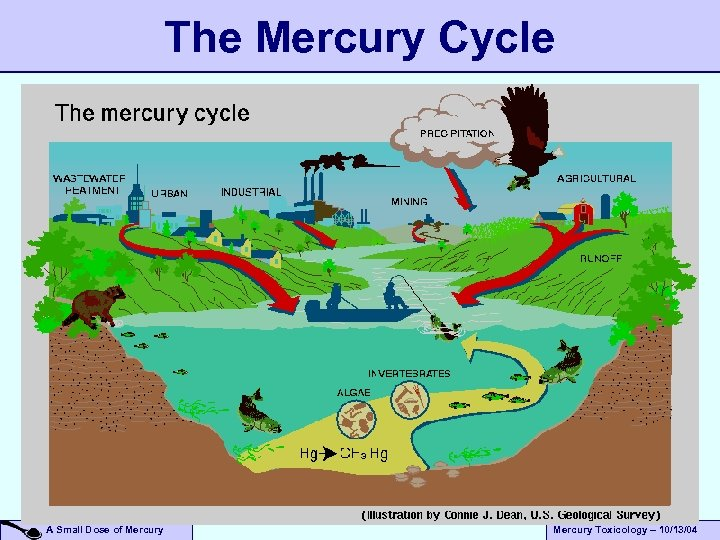 The Mercury Cycle A Small Dose of Mercury Toxicology – 10/13/04