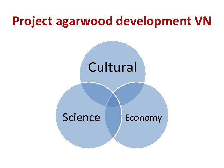 Project agarwood development VN Cultural Science Economy