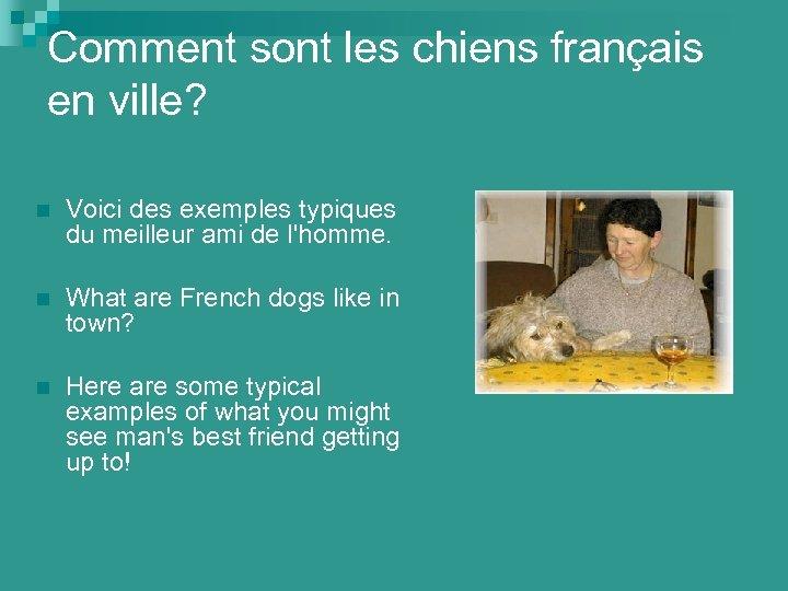 Comment sont les chiens français en ville? n Voici des exemples typiques du meilleur