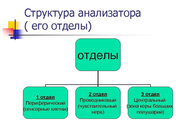 Структура анализатора ( его отделы) отделы 1 отдел Периферический (сенсорные клетки) 2 отдел Проводниковый