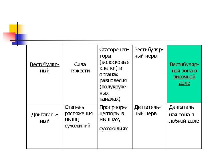 Вестибулярный Сила тяжести Двигательный Степень растяжения мышц сухожилий Статорецеп- Вестибулярторы ный нерв (волосковые клетки)