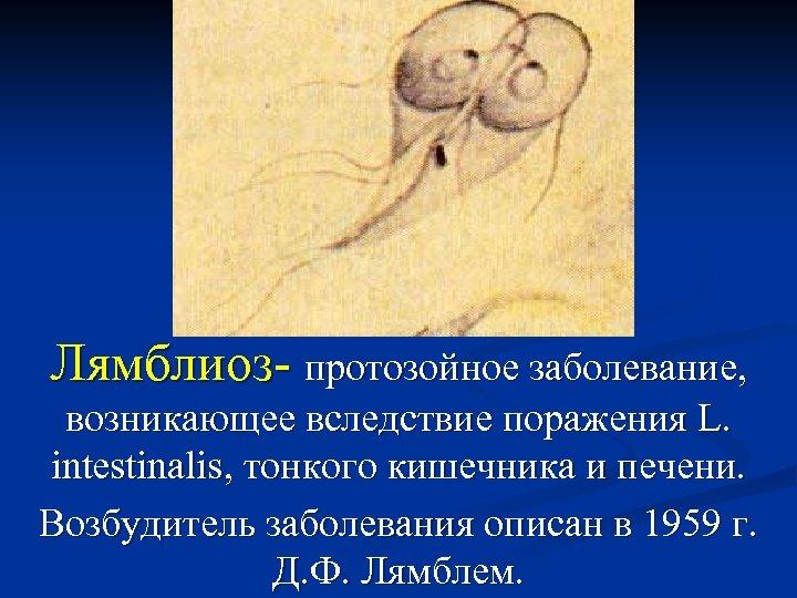 Лямблиоз- протозойное заболевание, возникающее вследствие поражения L. intestinalis, тонкого кишечника и печени. Возбудитель заболевания