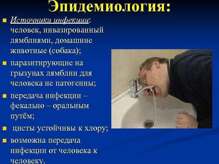 Эпидемиология: n n n Источники инфекции: человек, инвазированный лямблиями, домашние животные (собака); паразитирующие на