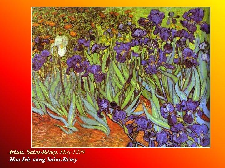 Irises. Saint-Rémy. May 1889 Hoa Iris vùng Saint-Rémy