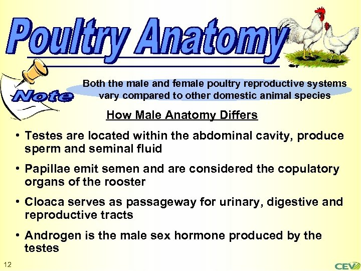 Both the male and female poultry reproductive systems vary compared to other domestic animal