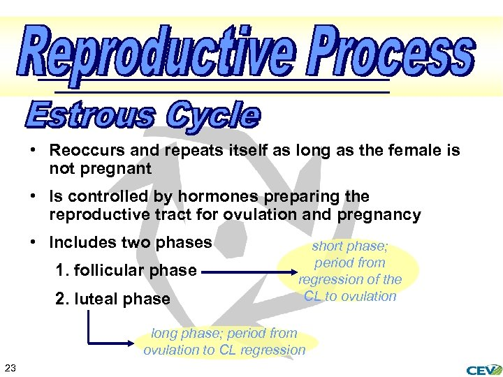 • Reoccurs and repeats itself as long as the female is not pregnant