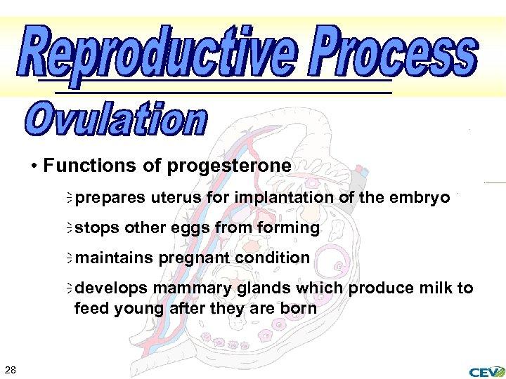 • Functions of progesterone ï prepares uterus for implantation of the embryo ï