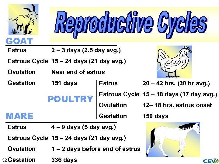 GOAT Estrus 2 – 3 days (2. 5 day avg. ) Estrous Cycle 15