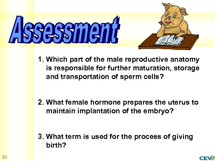 1. Which part of the male reproductive anatomy is responsible for further maturation, storage