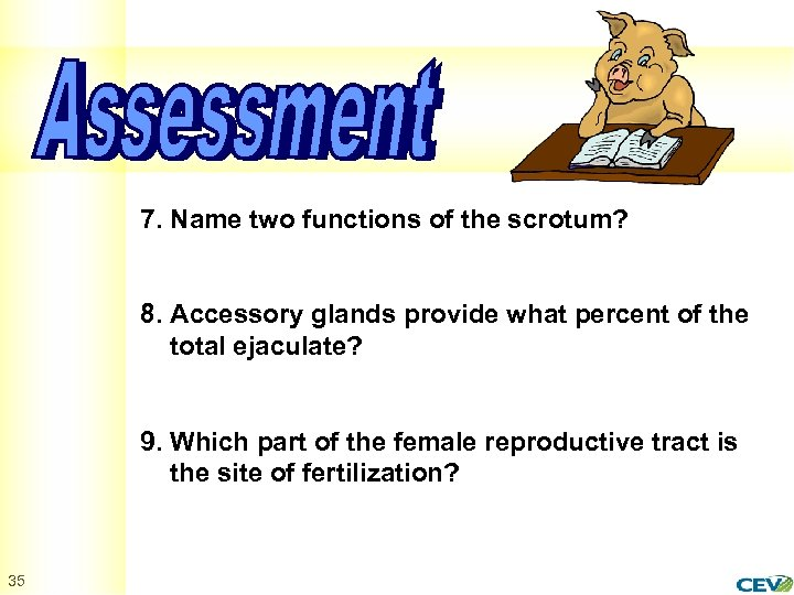 7. Name two functions of the scrotum? 8. Accessory glands provide what percent of