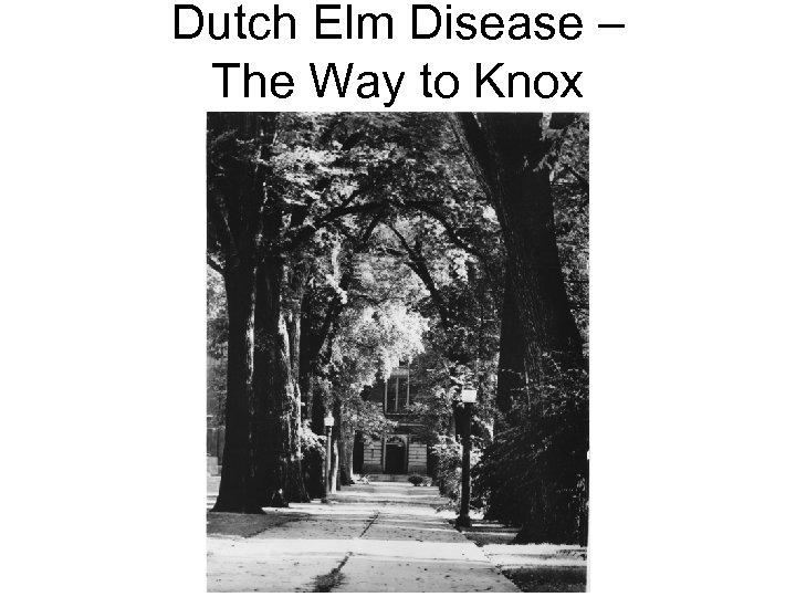 Dutch Elm Disease – The Way to Knox