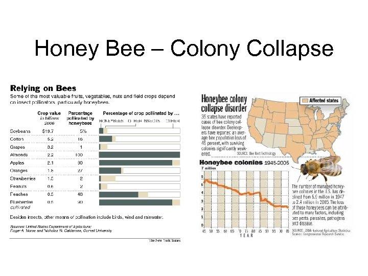 Honey Bee – Colony Collapse
