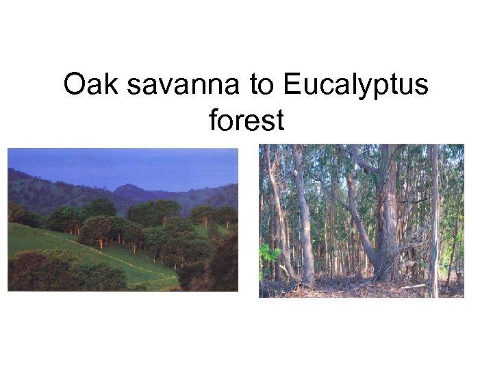 Oak savanna to Eucalyptus forest