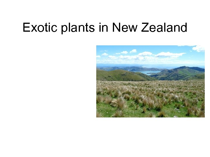 Exotic plants in New Zealand
