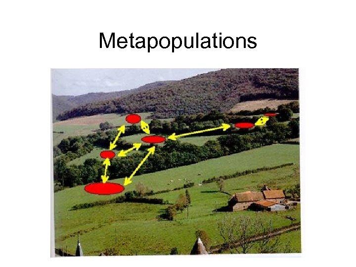 Metapopulations