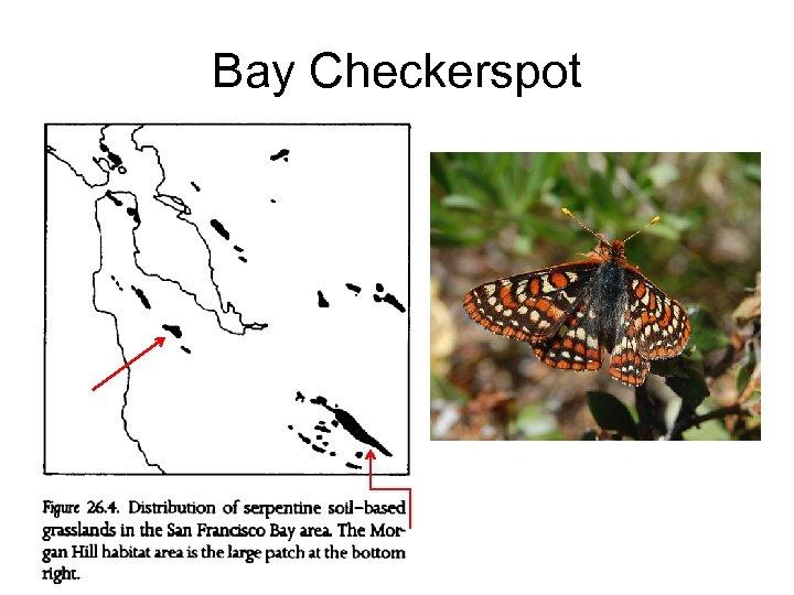 Bay Checkerspot