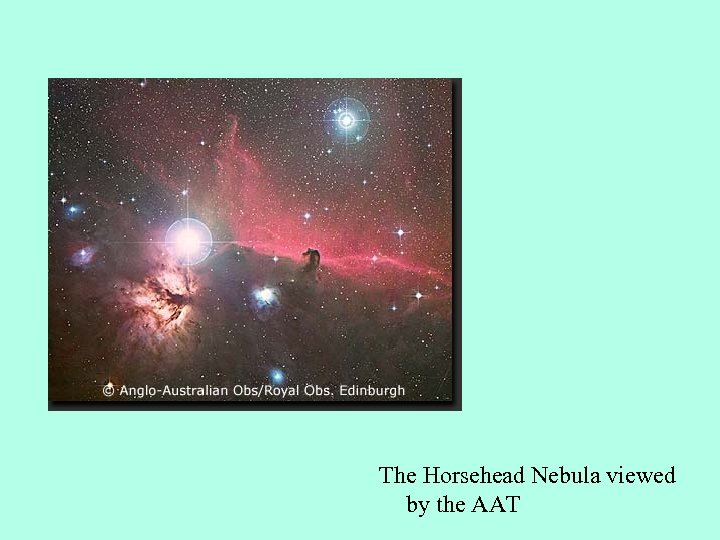 The Horsehead Nebula viewed by the AAT