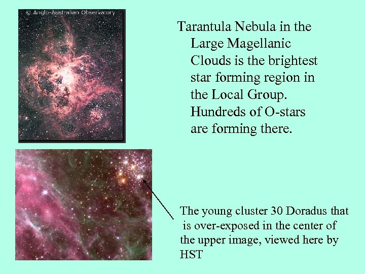 Tarantula Nebula in the Large Magellanic Clouds is the brightest star forming region in