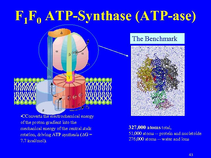 F 1 F 0 ATP-Synthase (ATP-ase) The Benchmark • CConverts the electrochemical energy of