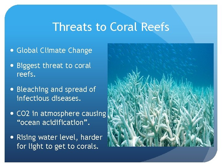 Threats to Coral Reefs Global Climate Change Biggest threat to coral reefs. Bleaching and