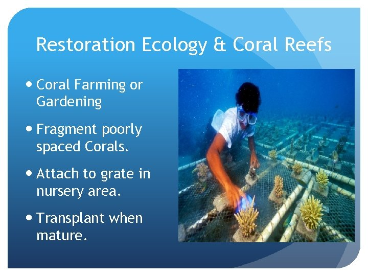 Restoration Ecology & Coral Reefs Coral Farming or Gardening Fragment poorly spaced Corals. Attach