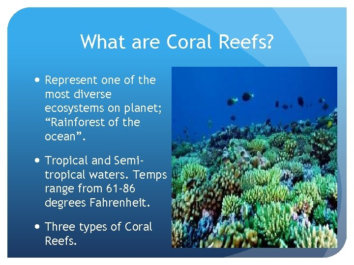 """What are Coral Reefs? Represent one of the most diverse ecosystems on planet; """"Rainforest"""