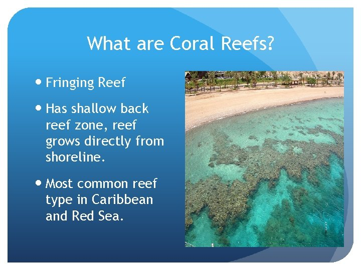 What are Coral Reefs? Fringing Reef Has shallow back reef zone, reef grows directly