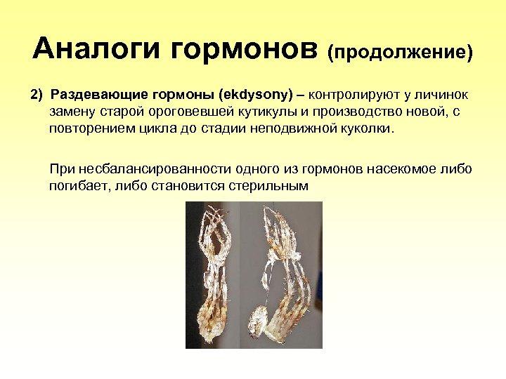Аналоги гормонов (продолжение) 2) Раздевающие гормоны (ekdysony) – контролируют у личинок замену старой ороговевшей