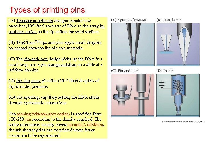 Types of printing pins (A) Tweezer or split-pin designs transfer low nanoliter (10 -9