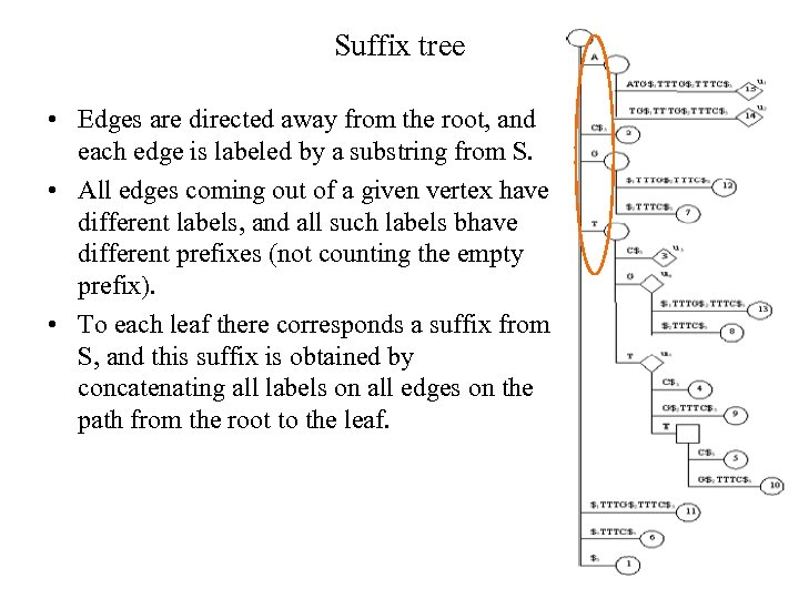 Suffix tree • Edges are directed away from the root, and each edge is