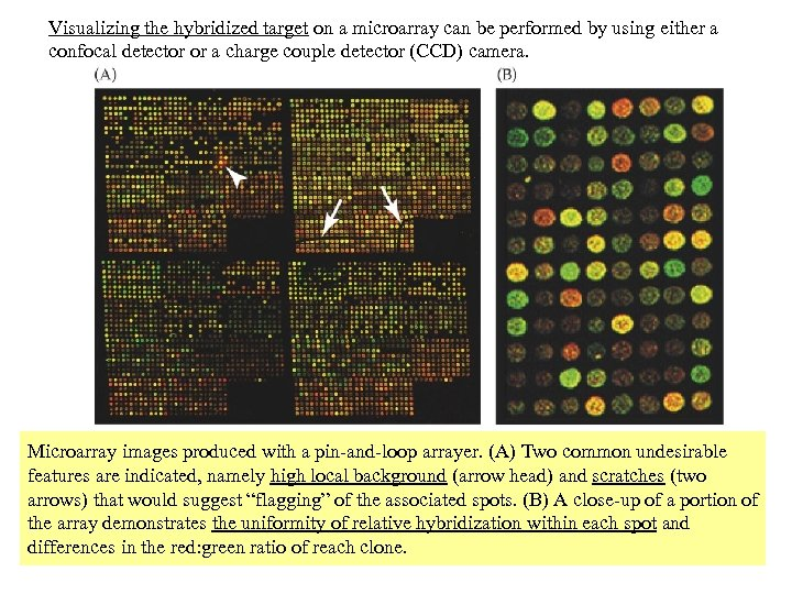 Visualizing the hybridized target on a microarray can be performed by using either a