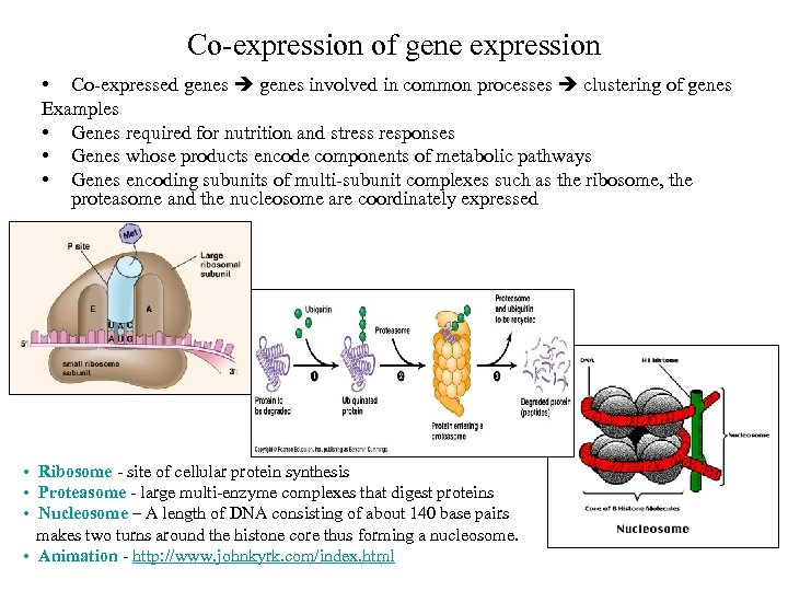 Co-expression of gene expression • Co-expressed genes involved in common processes clustering of genes