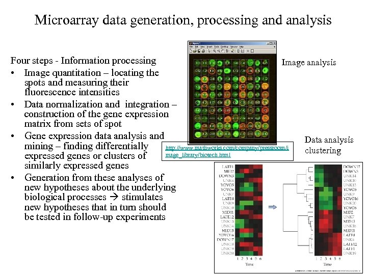 Microarray data generation, processing and analysis Four steps - Information processing Image analysis •
