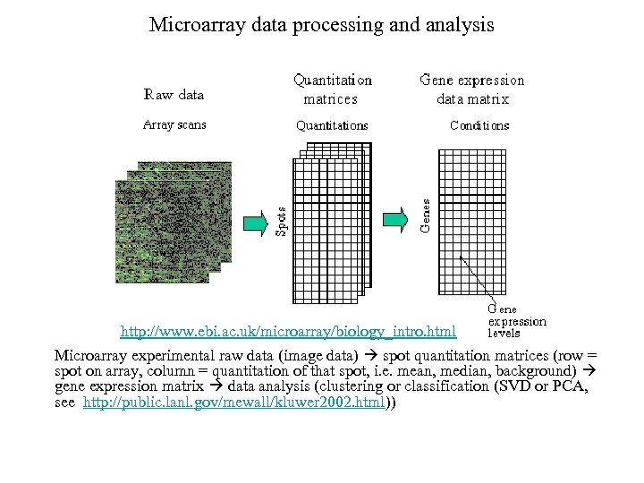 Microarray data processing and analysis http: //www. ebi. ac. uk/microarray/biology_intro. html Microarray experimental raw