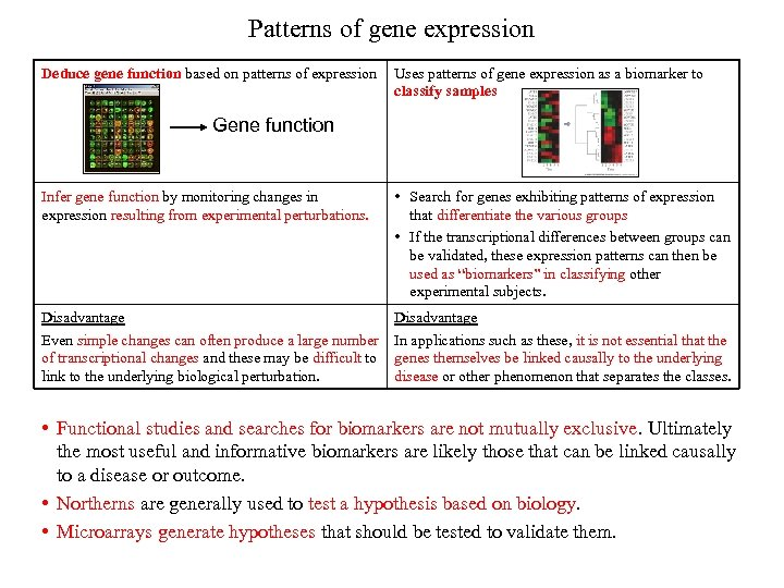 Patterns of gene expression Deduce gene function based on patterns of expression Uses patterns