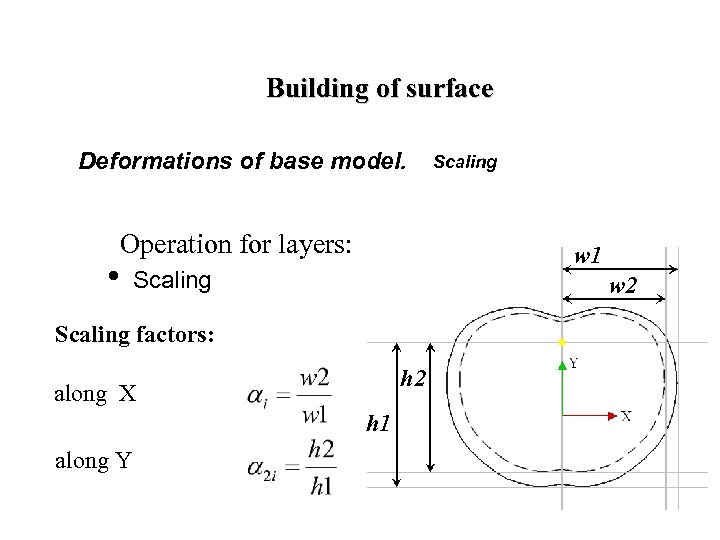 Building of surface Deformations of base model. Operation for layers: w 1 • Scaling