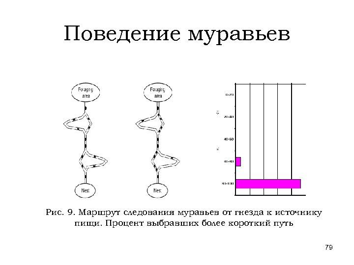 Поведение муравьев Рис. 9. Маршрут следования муравьев от гнезда к источнику пищи. Процент выбравших