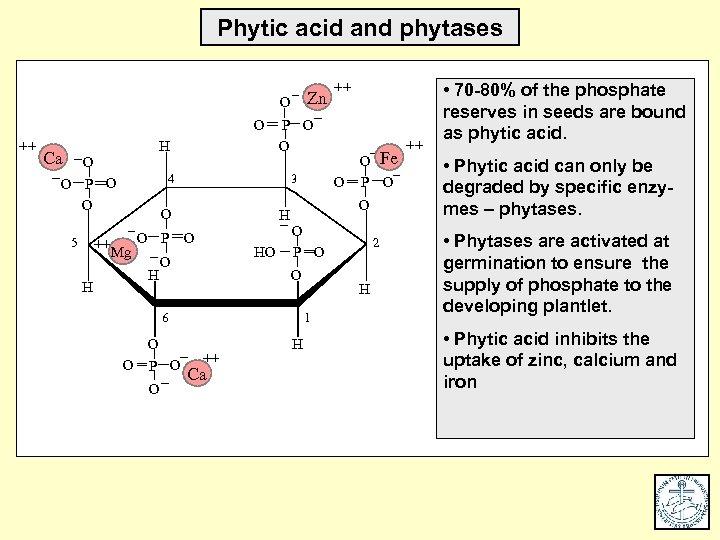 Phytic acid and phytases O Zn O ++ H Ca O O P O