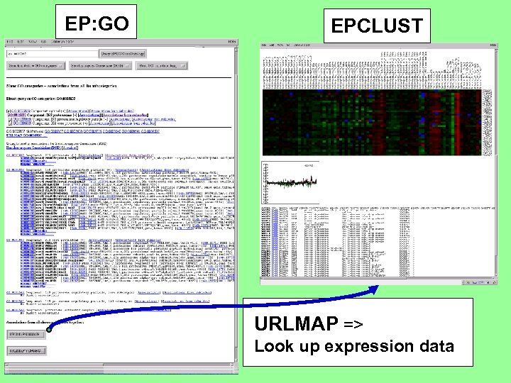 EP: GO EPCLUST URLMAP => Look up expression data