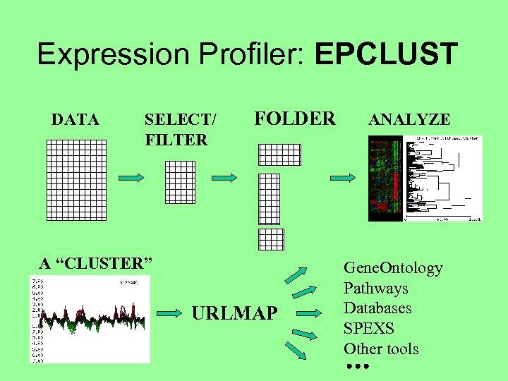 "Expression Profiler: EPCLUST DATA SELECT/ FILTER FOLDER A ""CLUSTER"" URLMAP ANALYZE Gene. Ontology Pathways"