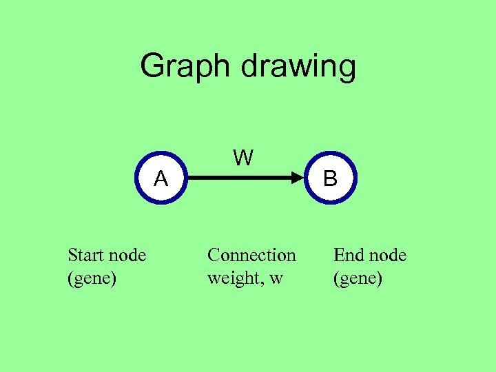 Graph drawing A Start node (gene) W Connection weight, w B End node (gene)