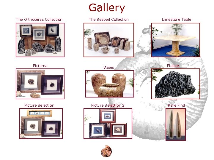 Gallery The Orthoceras Collection The Seabed Collection Pictures Vases Picture Selection 2 Limestone Table