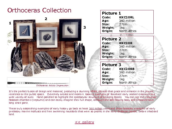 Orthoceras Collection 1 Picture 1 2 3 Code: Age: Size: Weight: Origin: KKC 2